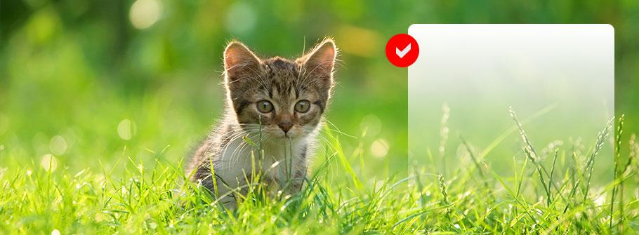 katt-ute1